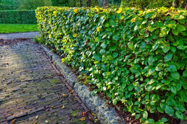 Jardin-Tailler-haies (4)