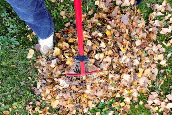Service-Jardin-ramassage-feuilles (4)